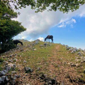 Cavalli Quasi Sulla Cima