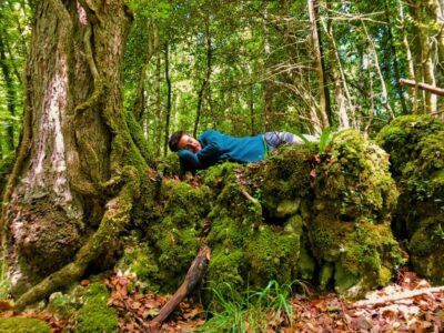 Pisolino Nella Foresta Umbra