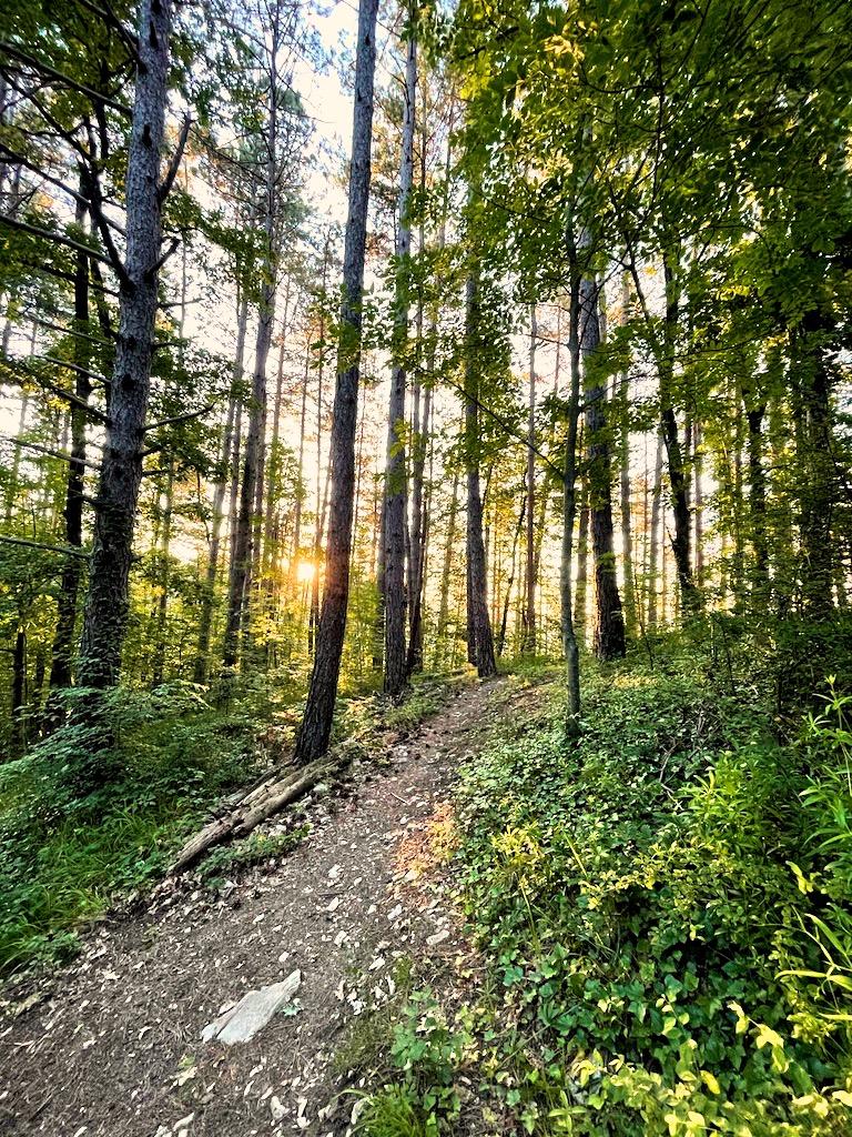 Vita nei boschi